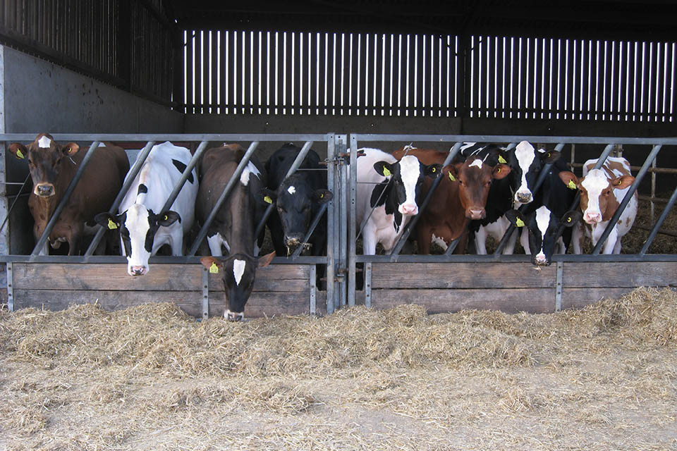 how to run a beef cattle farm
